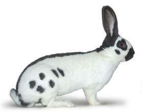 Кролик  Немецкий пестрый великан